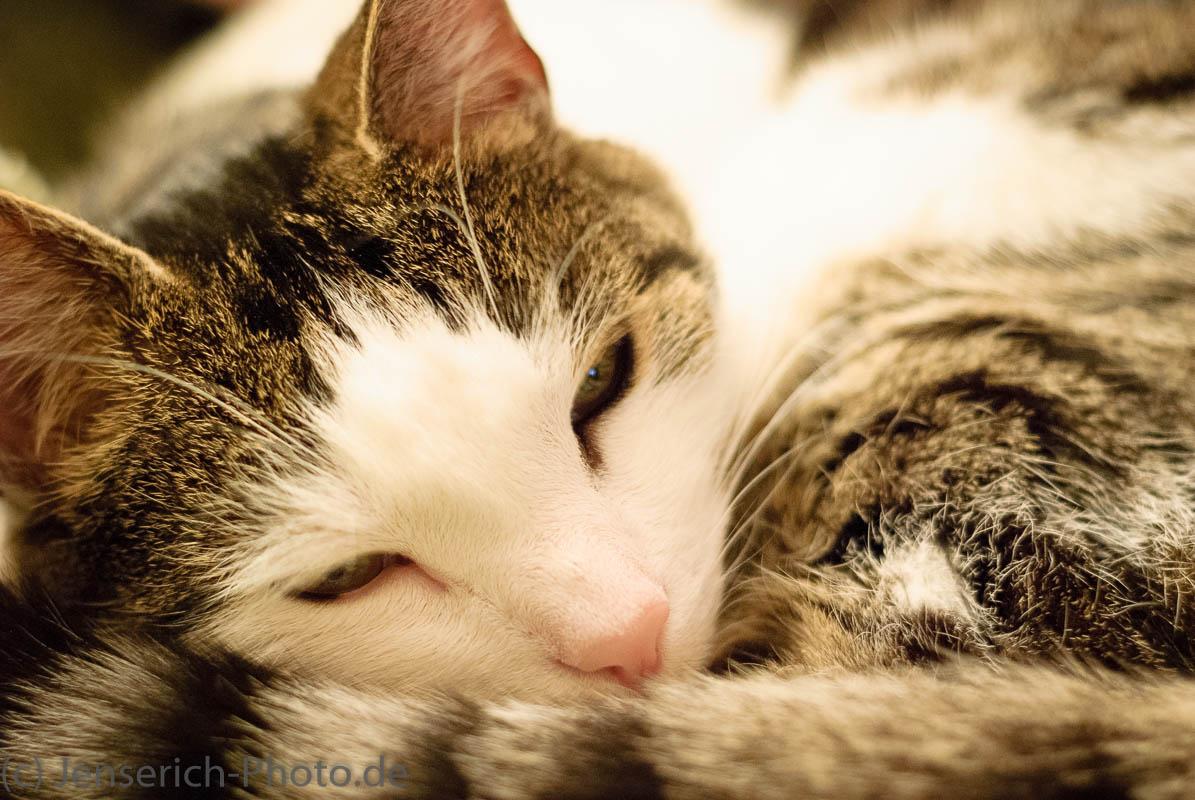 Kater Jimmy† schwer beschäftigt beim Schlafen