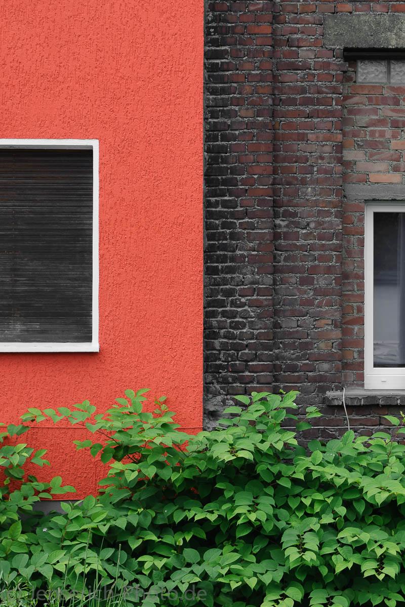Dreifarbigkeit Hauswand und Busch