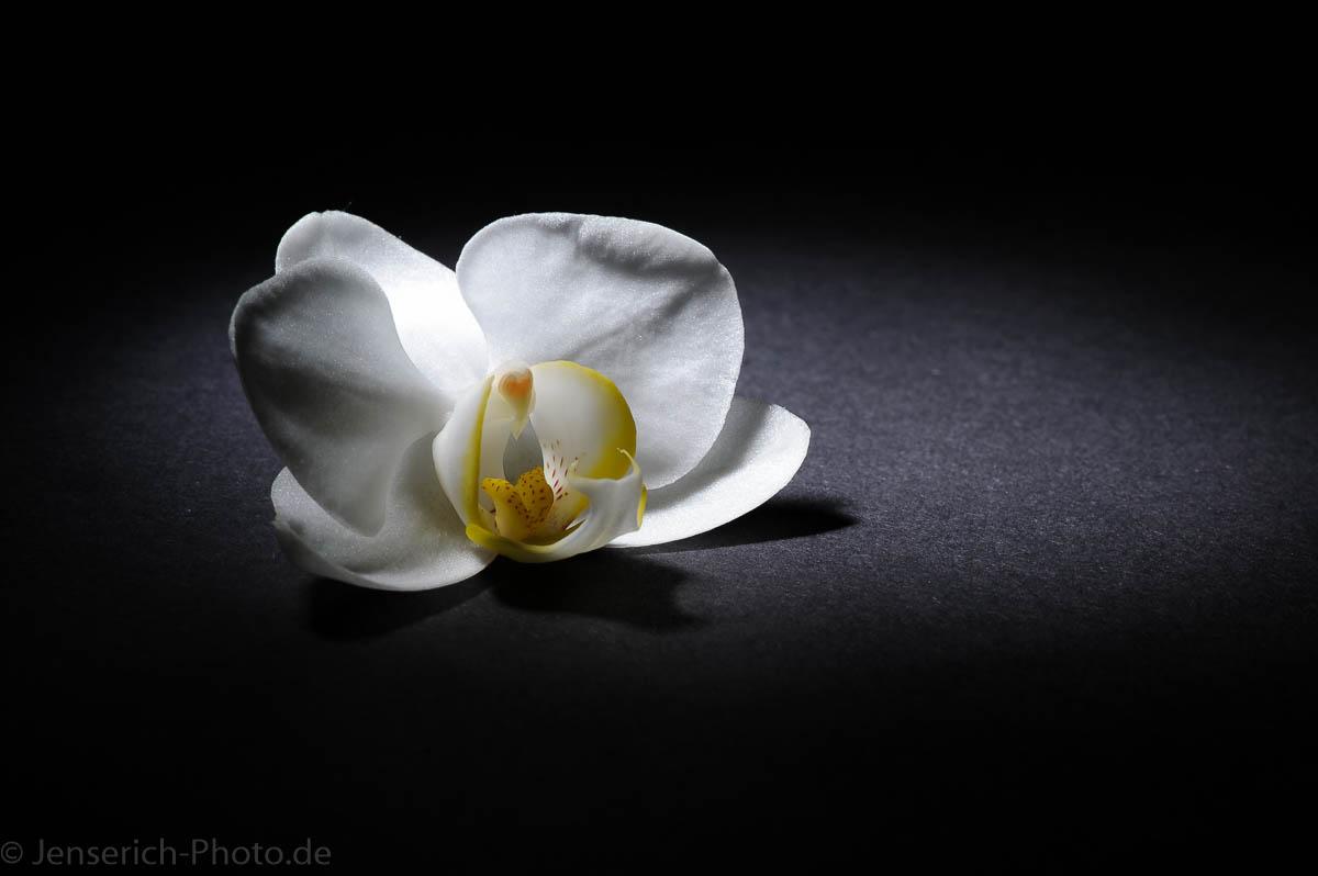 Eine weiße Orchidee