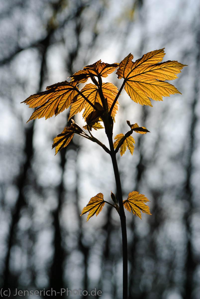 Das Blatt im Wald