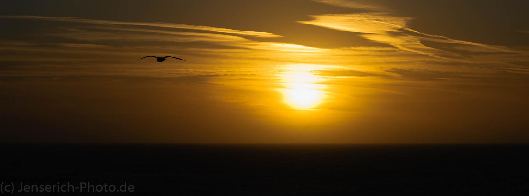 Eine Möwe im Sonnenuntergang an der Nordsee